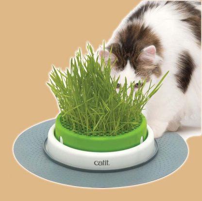 Présentation de la jardinière d'herbe à chat Senses 2.0 Catit