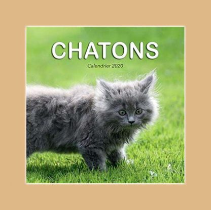 Chatons calendrier 2020