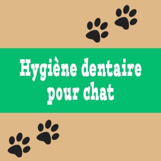 Hygiène dentaire pour chat