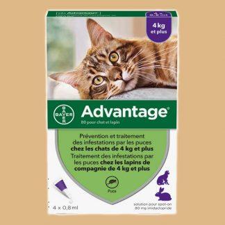 Advantage 80 pour chat de 4 kg et plus